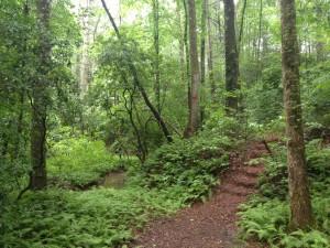 Spiritual Retreat in Nature